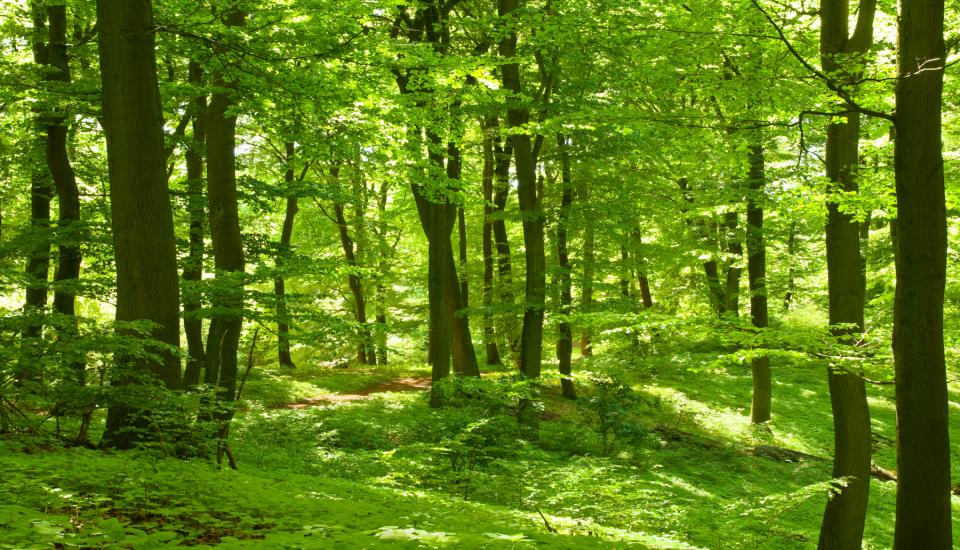 Waldbaden in Göttungen